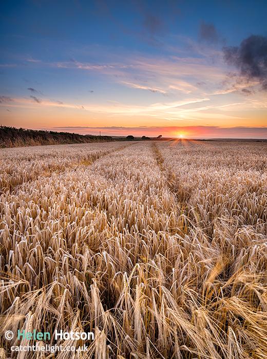 Barley-036
