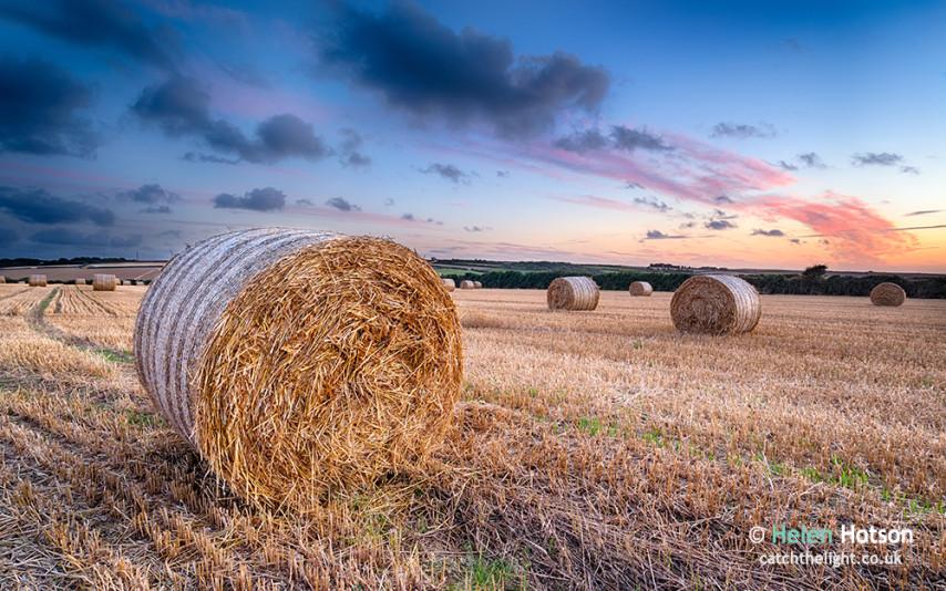 Barley-Field-066
