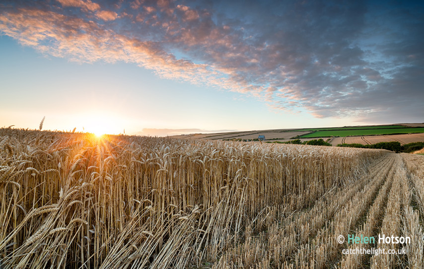 Corn-Field-Sunset-002